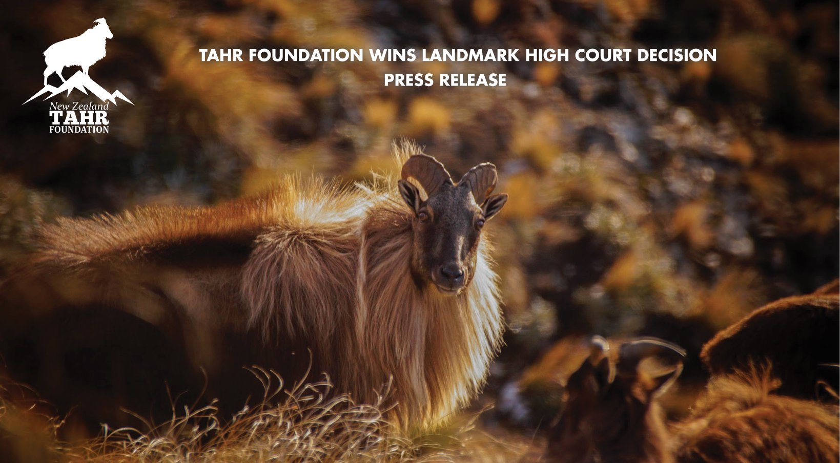 TAHR FOUNDATION WELCOMES LANDMARK HIGH COURT DECISION